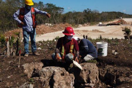 Denuncian que Fonatur incumple con suspensión de obras del Tren Maya