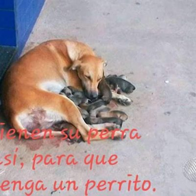 Campaña para esterilizar perros en el sur de Mérida