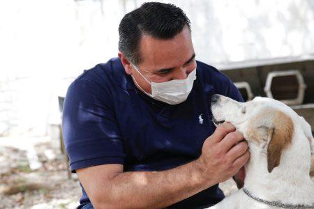 Mérida tiene buen avance en la protección y bienestar animal, afirma el alcalde Renán Barrera