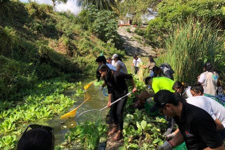 Presentan Semáforo de condición de cenotes urbanos en Cancún