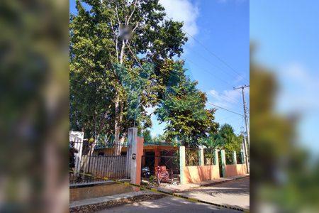 Fallece electrocutado mientras bajaba frutos de un árbol
