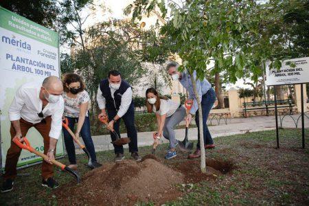 El Ayuntamiento alcanza la meta de sembrar 100,000 árboles