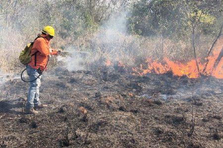 Controlado el incendio forestal de Dzemul: 11 hectáreas afectadas