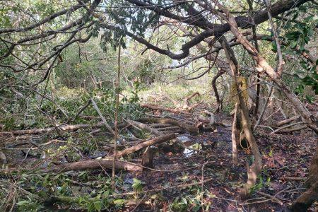 Denuncian continuo ecocidio en San Felipe; Profepa y el ayuntamiento, cómplices