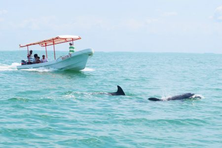 Isla Aguada, nueva joya del ecoturismo en Campeche