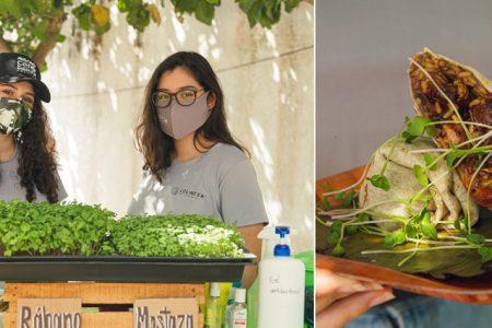 Lol Neek', huerto urbano que produce brotes y germinados en Mérida