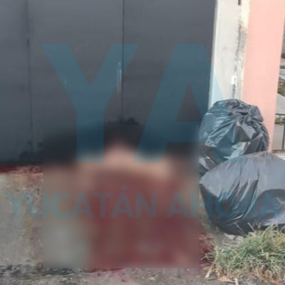 Pitbulls atacan y matan a Lolita, en Chuburná