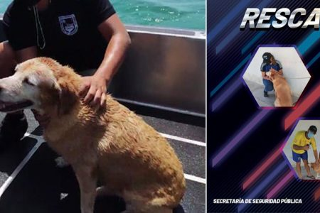Sana y salva, la Wera, perrita rescatada en el mar, ya está en casa