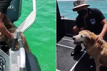 Rescatan una perrita que nadaba a 300 metros de la costa de Progreso
