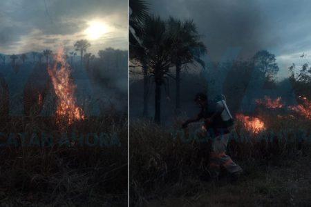 Incendio consume 40 hectáreas de maleza en Ticul