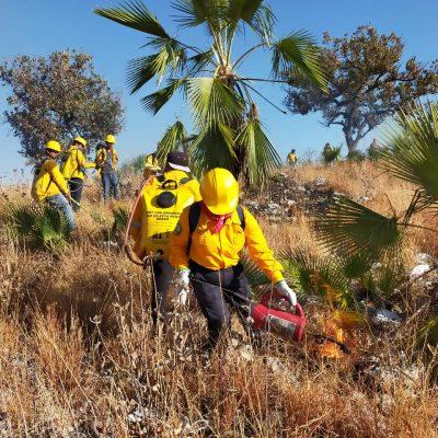Conafor combate incendio forestal en la Reserva Ría Celestún
