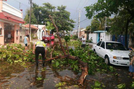 Fuertes vientos derriban más de 10 árboles del Parque Ecológico del Poniente