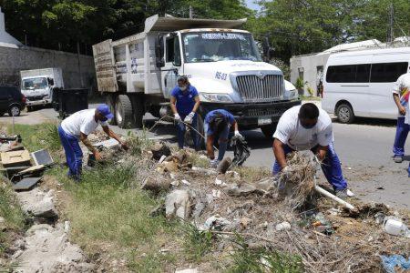 El Ayuntamiento realiza acciones de limpieza para erradicar focos de infección