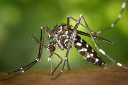Reaparece el dengue en la Península de Yucatán: primer caso en Campeche