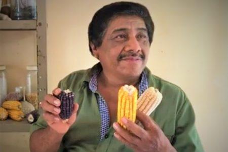 Rendirán homenaje a yucatecos que mejoraron las semillas de maíz
