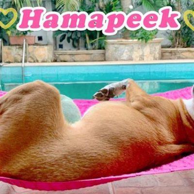"""Crean las hamacas para perritos """"Hamapeek"""""""