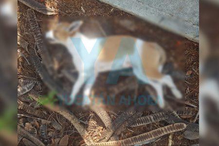 Mujeres arman disturbio por un perro que fue atropellado en Gran Santa Fe