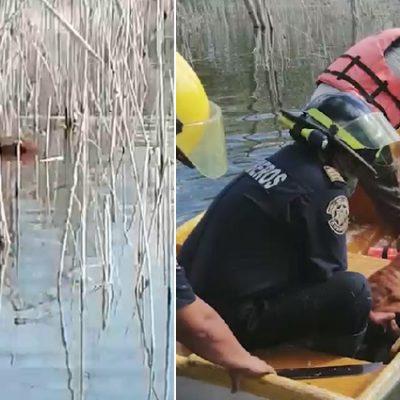 Rescatan un perro que cayó a la aguada del Acuaparque