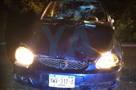 Se le atraviesa un rebaño de reses en carretera: auto dañado y chocolomo seguro