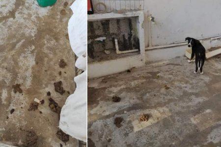 Vecinos de Sisal ya no soportan mal olor por heces y orines de perros que no limpian