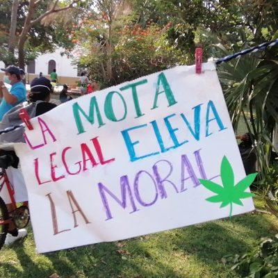Insisten en que ya no se criminalice el consumo recreativo de marihuana