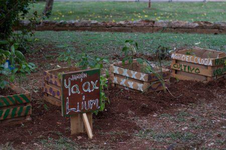 Hacen jardín cannábico en el Parque de la Paz, en Mérida