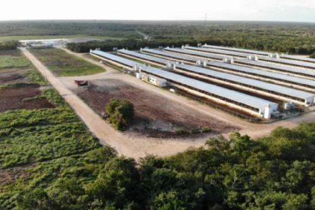 Juzgado federal ordena paralización total de la granja porcícola en Chapab