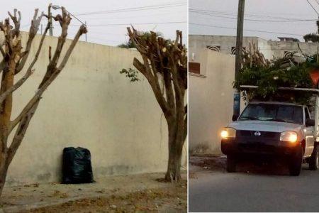 Terrible maldad humana: mandan a mutilar árboles para que nadie se estacione bajo su sombra