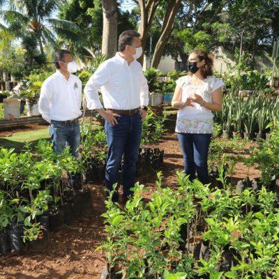 El Ayuntamiento de Mérida plantará 10 mil árboles más en el municipio