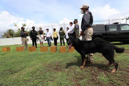 Conoce a 'Hocky' y 'Kadet', los perros que adquirió Yucatán para detectar casos de Covid-19