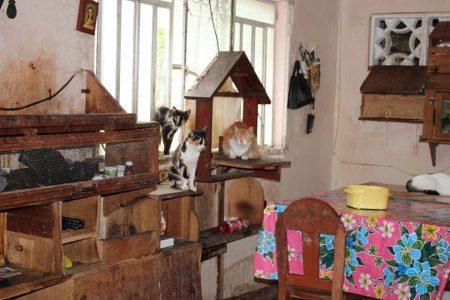 Muere y quedan en desamparo sus 60 gatos, en una casa del centro de Mérida