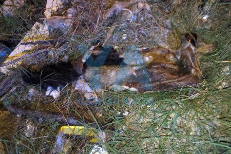 Encuentran bolsa con vísceras y pieles de perros