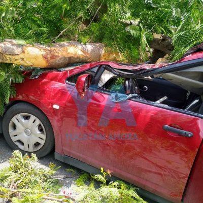 Cae otro árbol: en la Bojórquez y sobre un auto de joven pareja de militares