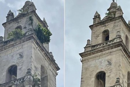Limpian de yerba las torres del campanario de la Catedral