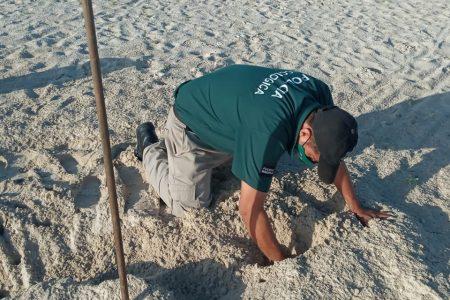 Policía Ecológica de Progreso, muy activa este verano para salvaguardar la flora y fauna
