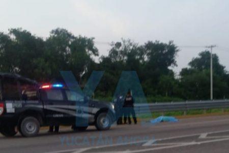 Muere atropellado en la carretera Mérida-Campeche