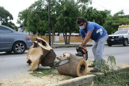 El Ayuntamiento continúa la limpieza de calles y avenidas en Mérida tras la tormenta Grace