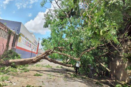 Están sin luz porque nadie quiere retirar un árbol que derribó Grace