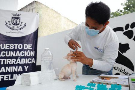 Comienza en Mérida la campaña gratuita de vacunación antirrábica