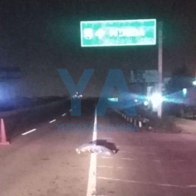 Muere atropellado en la entrada a Mérida vía Cancún
