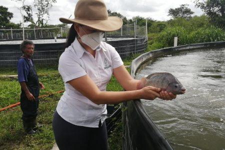 Con biotecnología, Acuícola Garza pone a Yucatán a la vanguardia en producción de peces