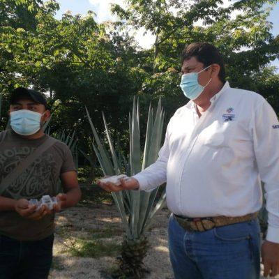 Entregan abejas reina a apicultores yucatecos de municipios afectados por el huracán Grace