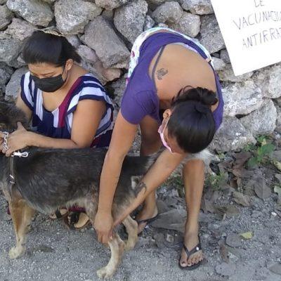 Yucatán, sin rabia humana desde hace 23 años