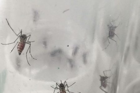 Yucatán, cuatro meses sin dengue, pese a ciclones e intensas lluvias