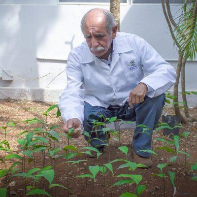 Fallece el doctor Alfonso Larqué Saavedra, destacado científico del CICY