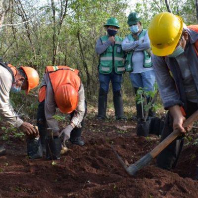 Transportistas locales llegan a un acuerdo con el Tren Maya