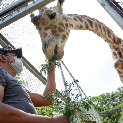 Trabajar con animales es algo increíble: Jesús Moreno, guarda animales de Animaya