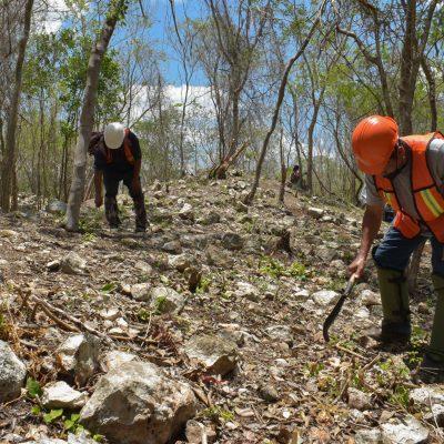 Comunidades yucatecas solicitan  intervención de la ONU ante presuntas anomalías del Tren Maya