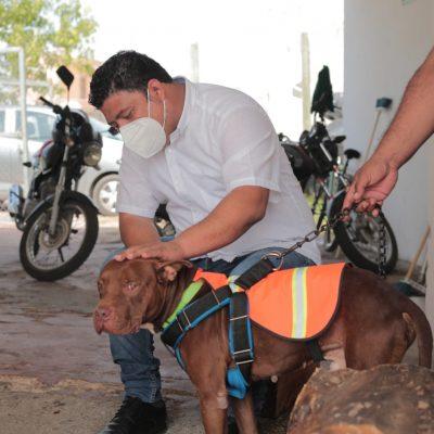 De perro callejero maltratado a mascota de Protección Civil en Kanasín