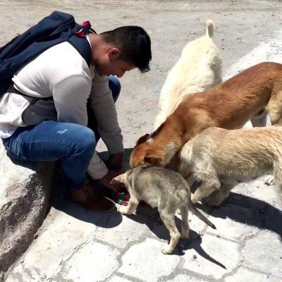 Renán Barrera propone nueva revisión al Reglamento de Protección de la Fauna